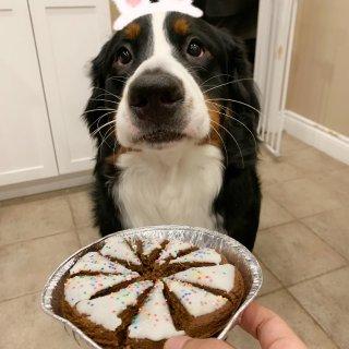 在家没事干…晒一下狗子的生日宴...