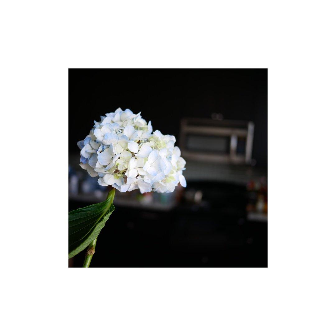 如果要选一种花来为家里增添些生机,...