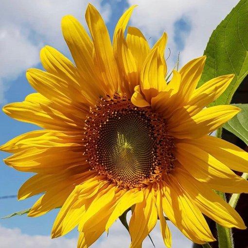 七夕礼物💛TF的阳光琥珀有幸福的味道💛💑