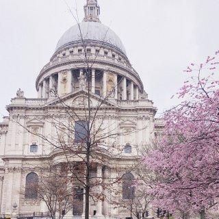 伦敦赏樱|圣保罗大教堂的樱花开了...