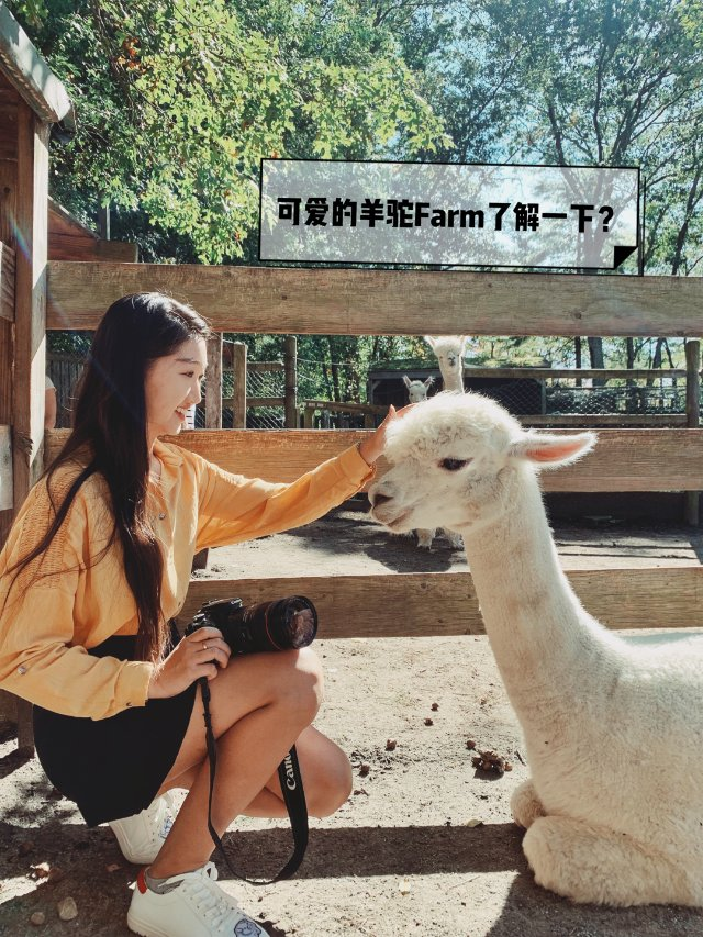 【KOL热身】🦙可爱的羊驼了解一下...