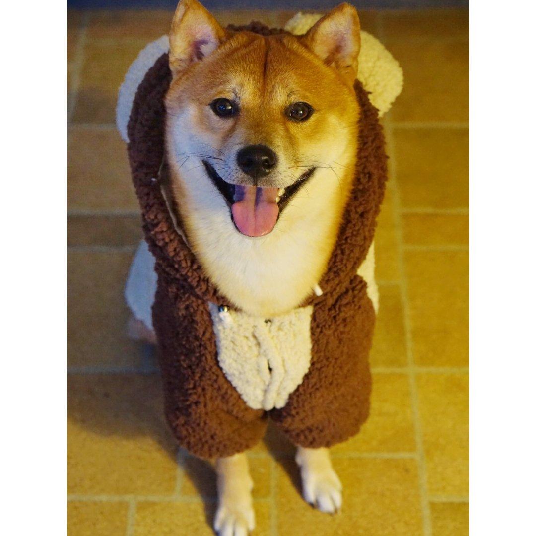 狗子冬装之熊熊装