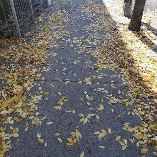 家附近就可以赏秋...