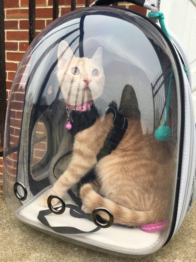 猫生的第一次旅行