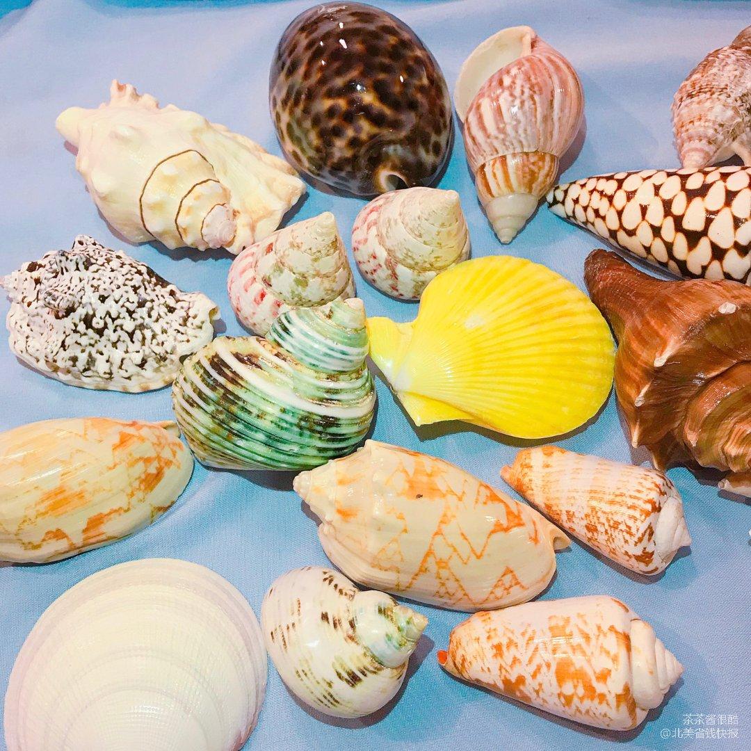 🐚从亚马逊淘了一堆贝壳用来装饰鱼缸🐠💖