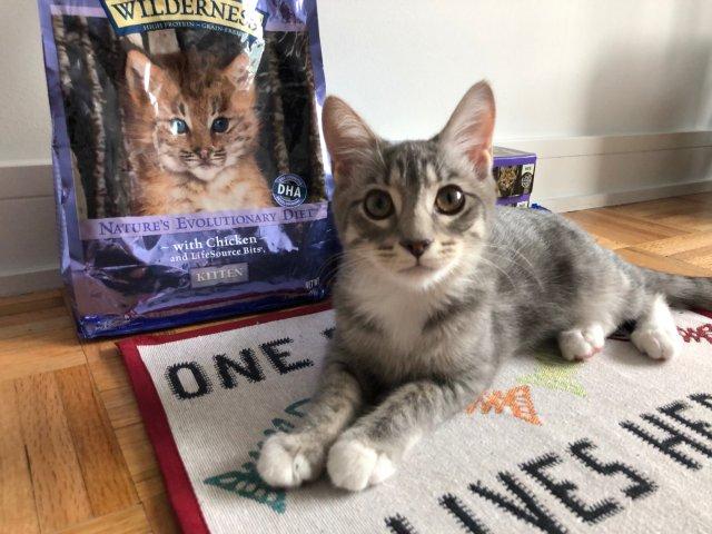 在纽约领养的小猫咪🐱