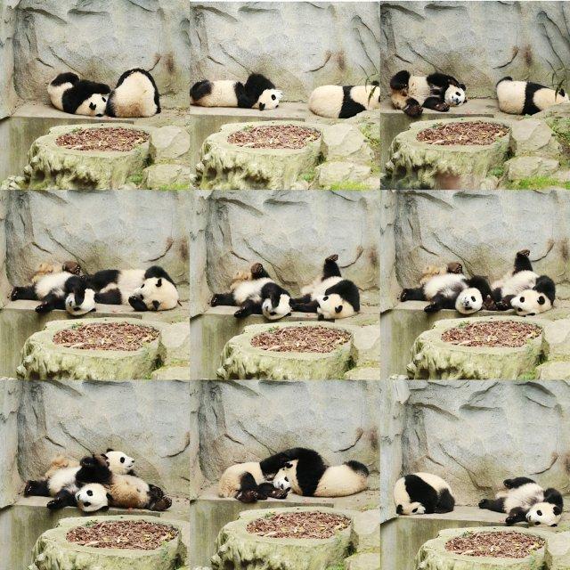 熊猫宝宝🐼
