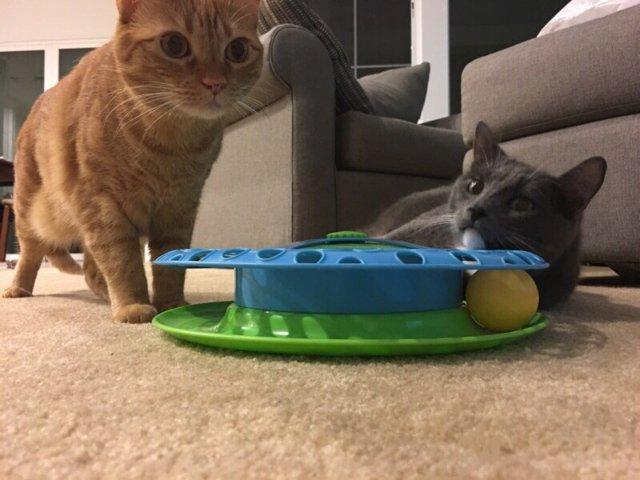 两只猫的日常玩耍