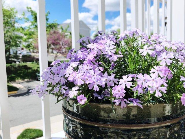 小阳台也可以拥有自己的春天