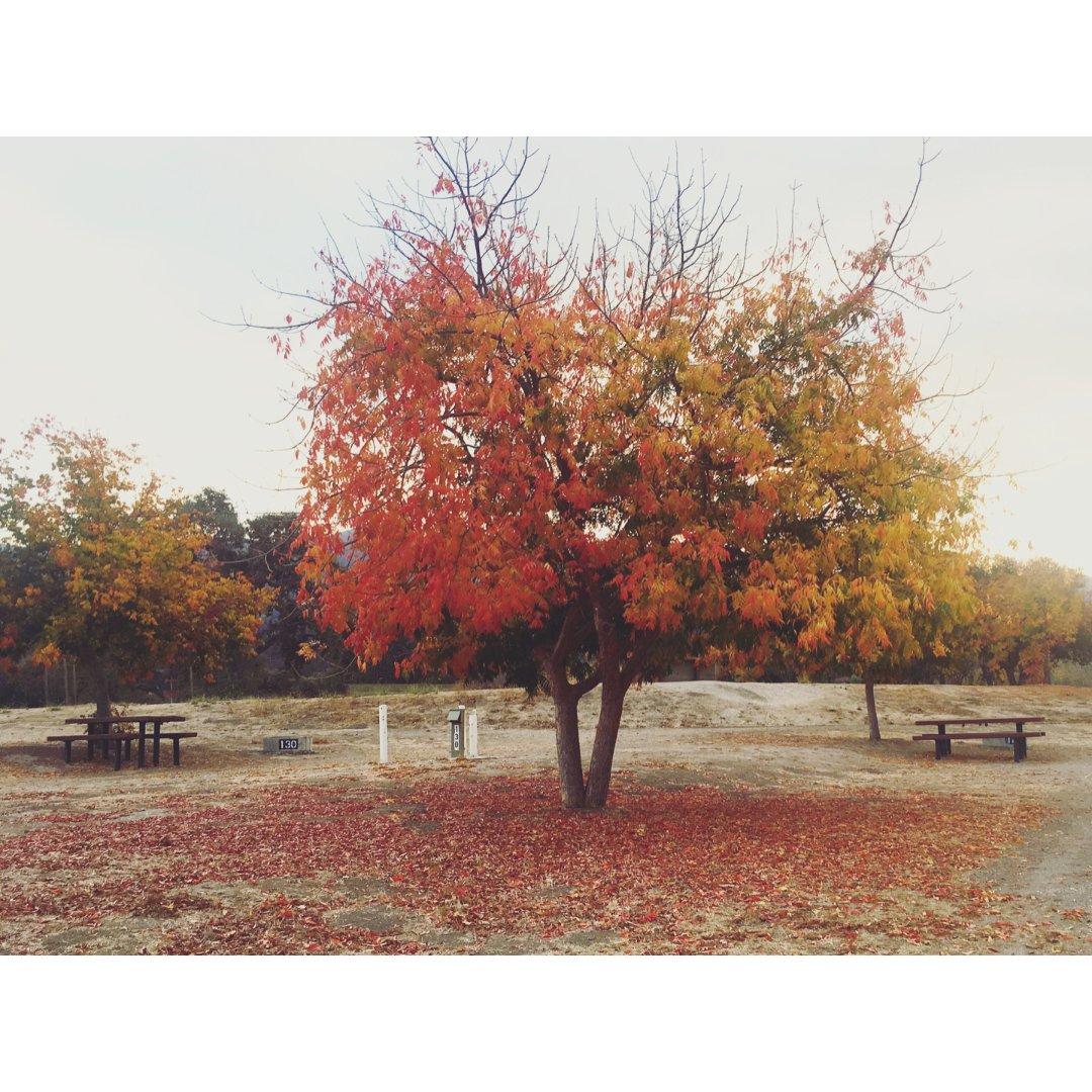 | 朝朝暮暮| 🍁加州终于有秋天啦...