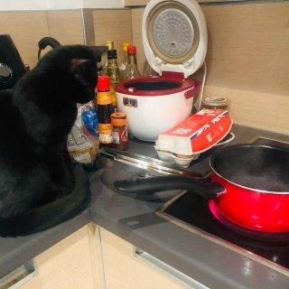 相册里的生活一角好像都是吃的和猫.....