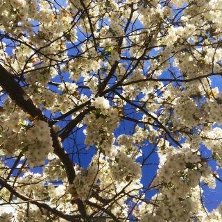 🇬🇧London·Spring 🌸|春日...