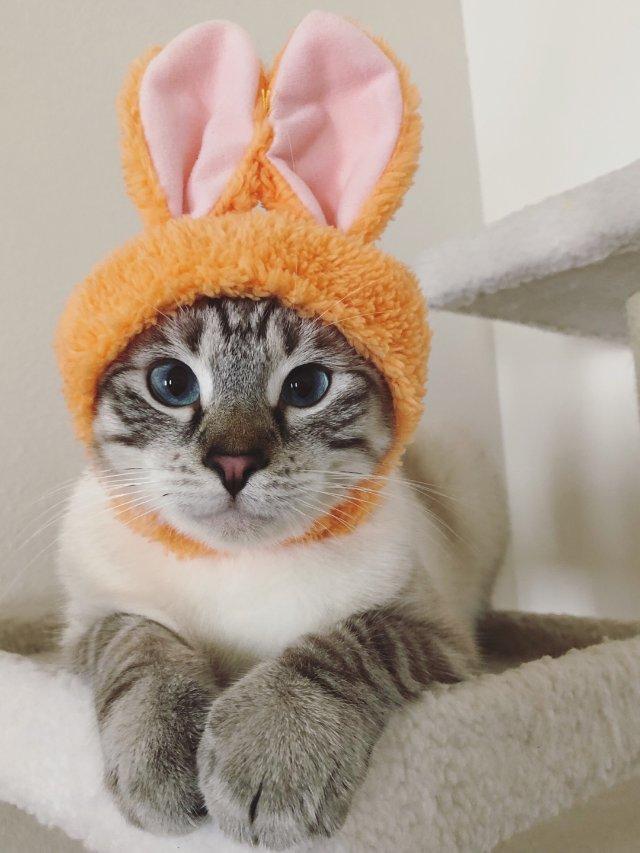 🐰Bunny cat