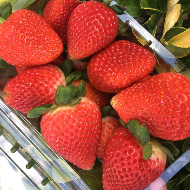 爱吃的草莓🍓