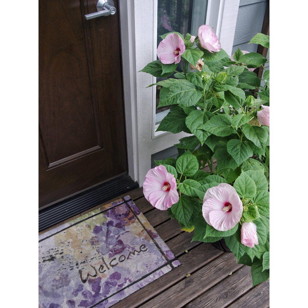 家门口也用花花打扮一下🌺