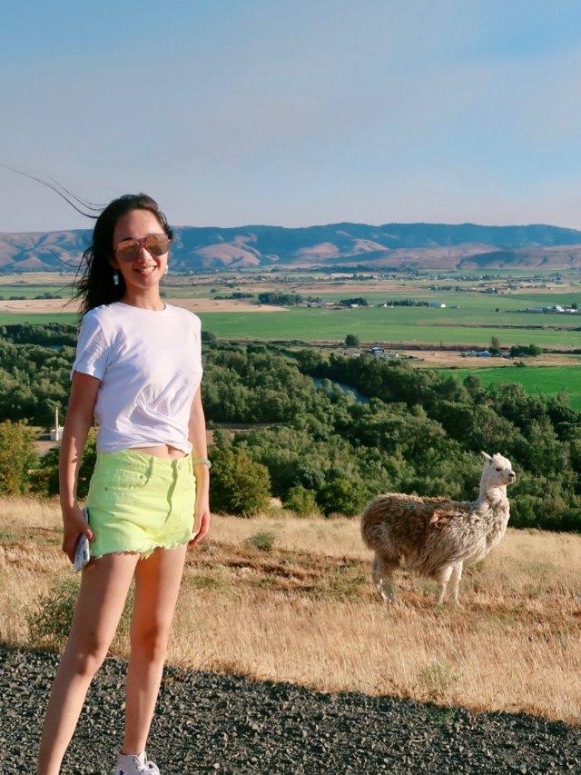 【西雅图周边】三只幸福的羊驼