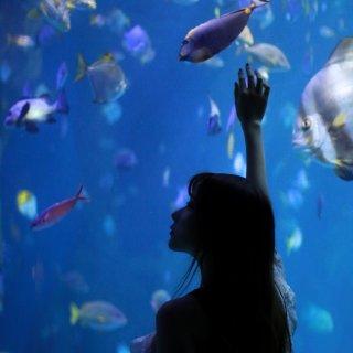 Self-portrait✖️水族馆🐬...
