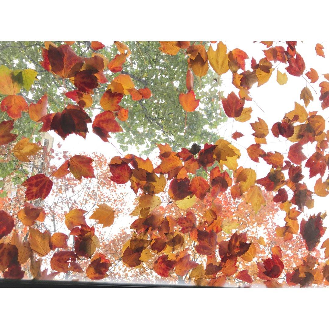 十月|相册里温哥华的秋天