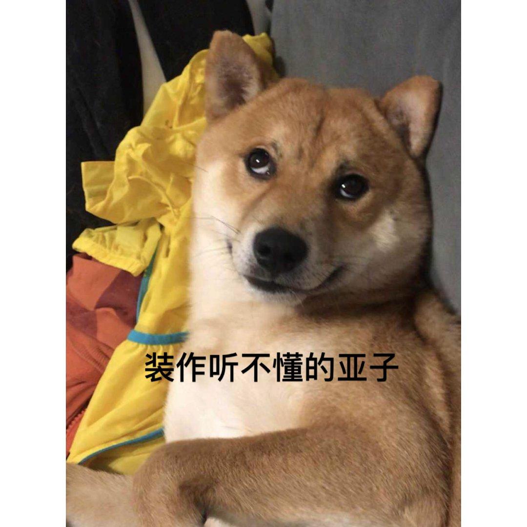 萌宠柴犬之表情包的生产机构