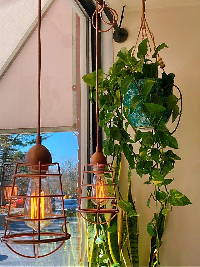 秋冬天的室内一抹绿