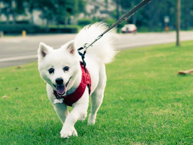 带渣见人 | 让狗狗穿得舒舒服服🐶