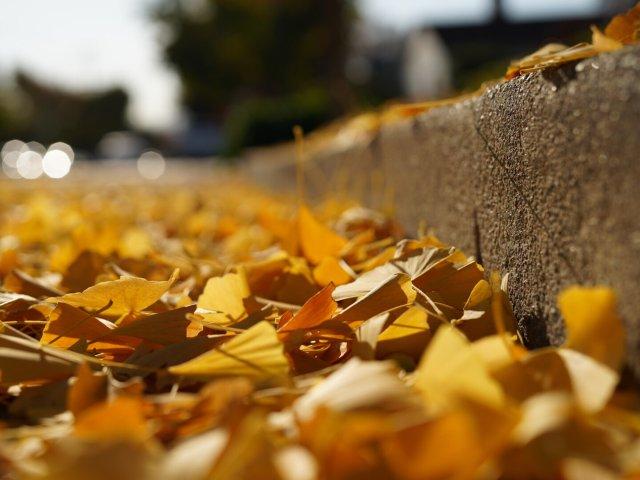 🍂秋天的颜色🍂
