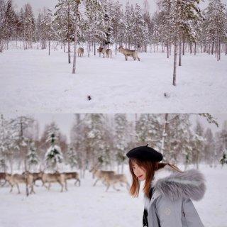 林深有麋鹿🦌