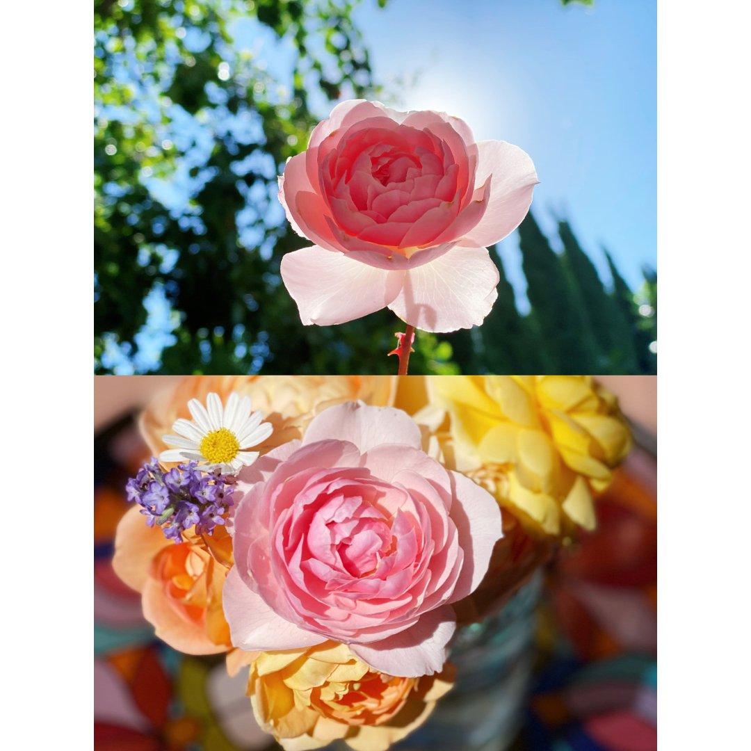 种花记|今日鲜切花