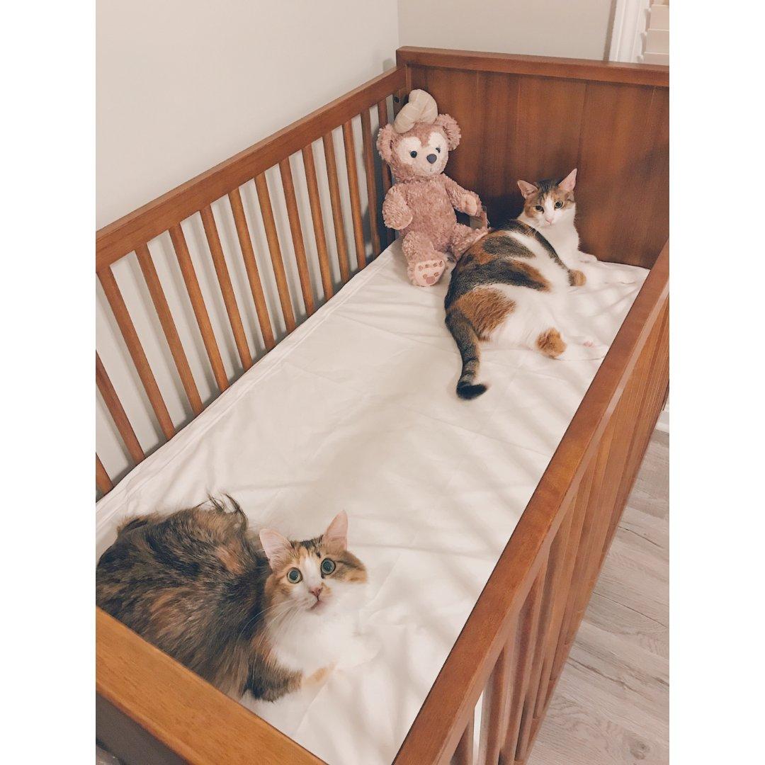 家有萌寵|與即將到來的寶寶爭寵的兩...