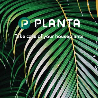 🌿家居绿植| 绝对是最好养的绿植了...