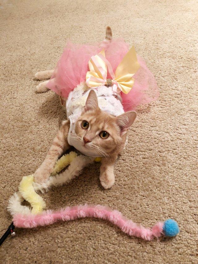 猫公主过年穿新衣服喽