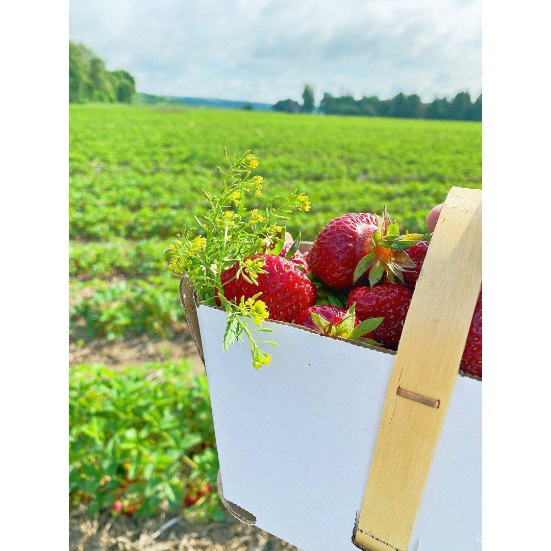 夏日摘粗莓🍓周末好去处🇨🇦
