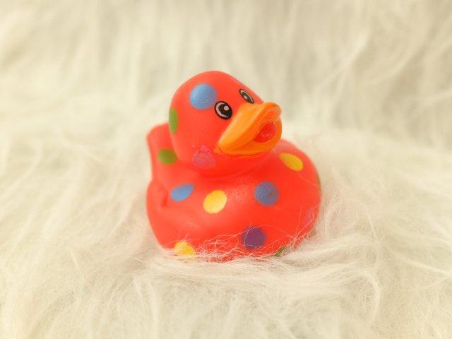 鼠年 | 超丑的小鸭鸭