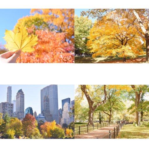 秋天的中央公园美哭啦!🍁🍁🍁