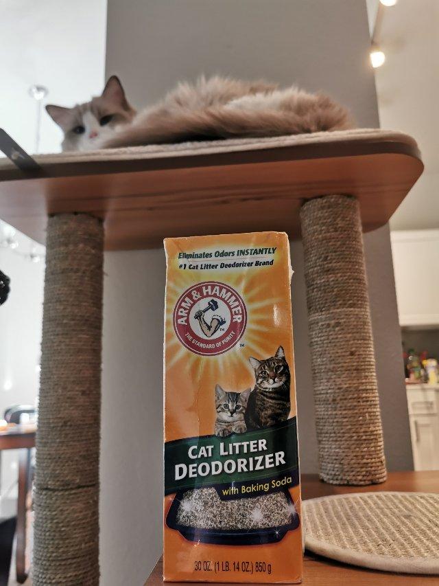 🐱猫砂除臭剂🐱铲屎官的鼻子拯救者!