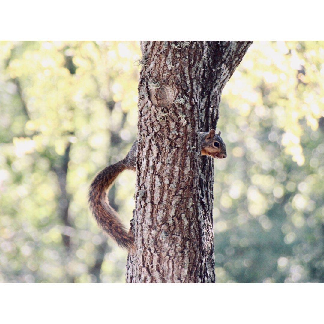 去公园散步偶遇到几十只松鼠🐿拍了一堆🤪