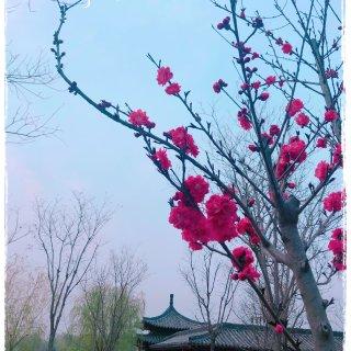 春天的花花(⁎⁍̴̛ᴗ⁍̴̛⁎)...