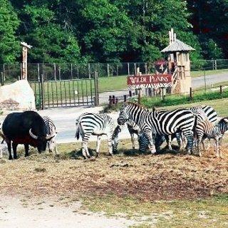 放风去喽~零接触的野生动物园...