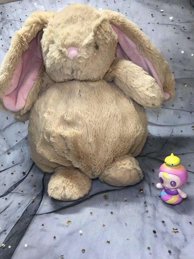 收获一只小兔几