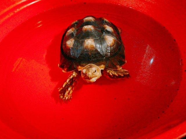 快睡觉的我日常----萌萌的龟宝宝又来了