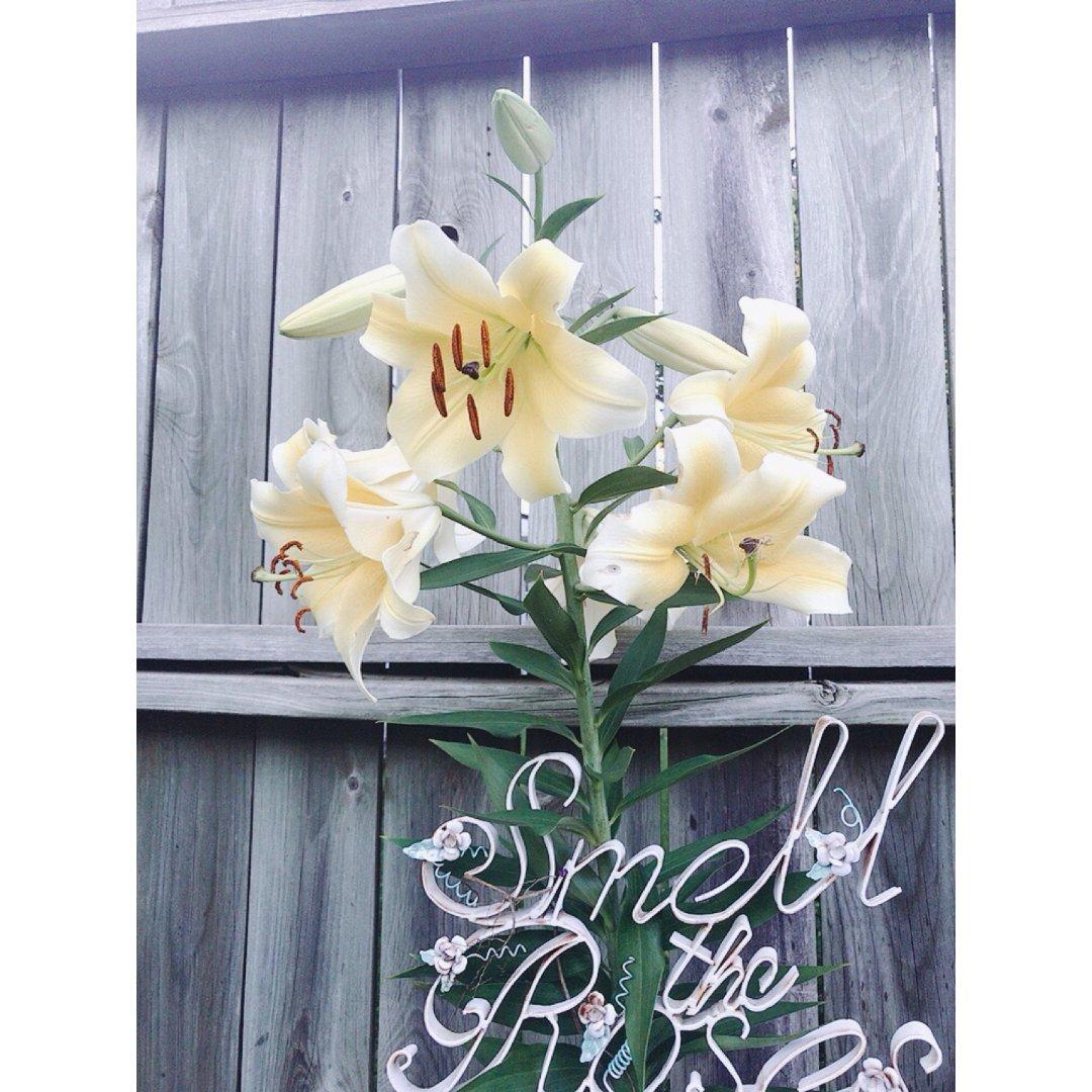 希望后院多开几朵花-10