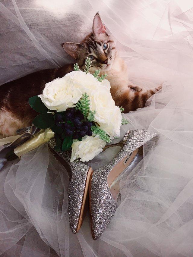 """""""高跟残疾星人""""也能穿的婚鞋—Mi..."""