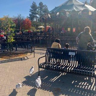 多伦多带娃好去处 Toronto zoo...