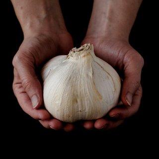 提前采收的elephant garlic...