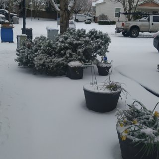 2021年第一场冻雨+雪🌨️...