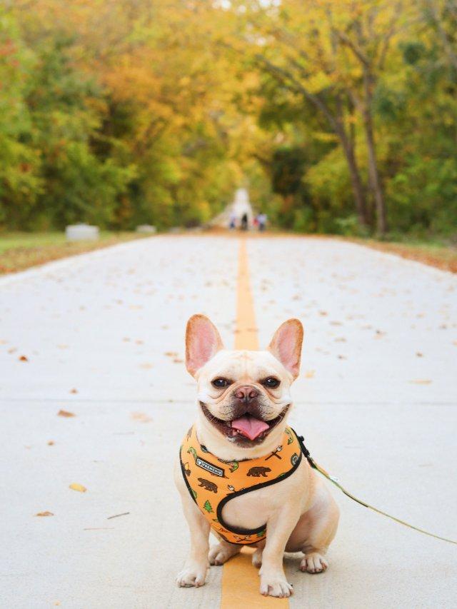 秋意浓浓🍂带狗狗去散步拍照📷