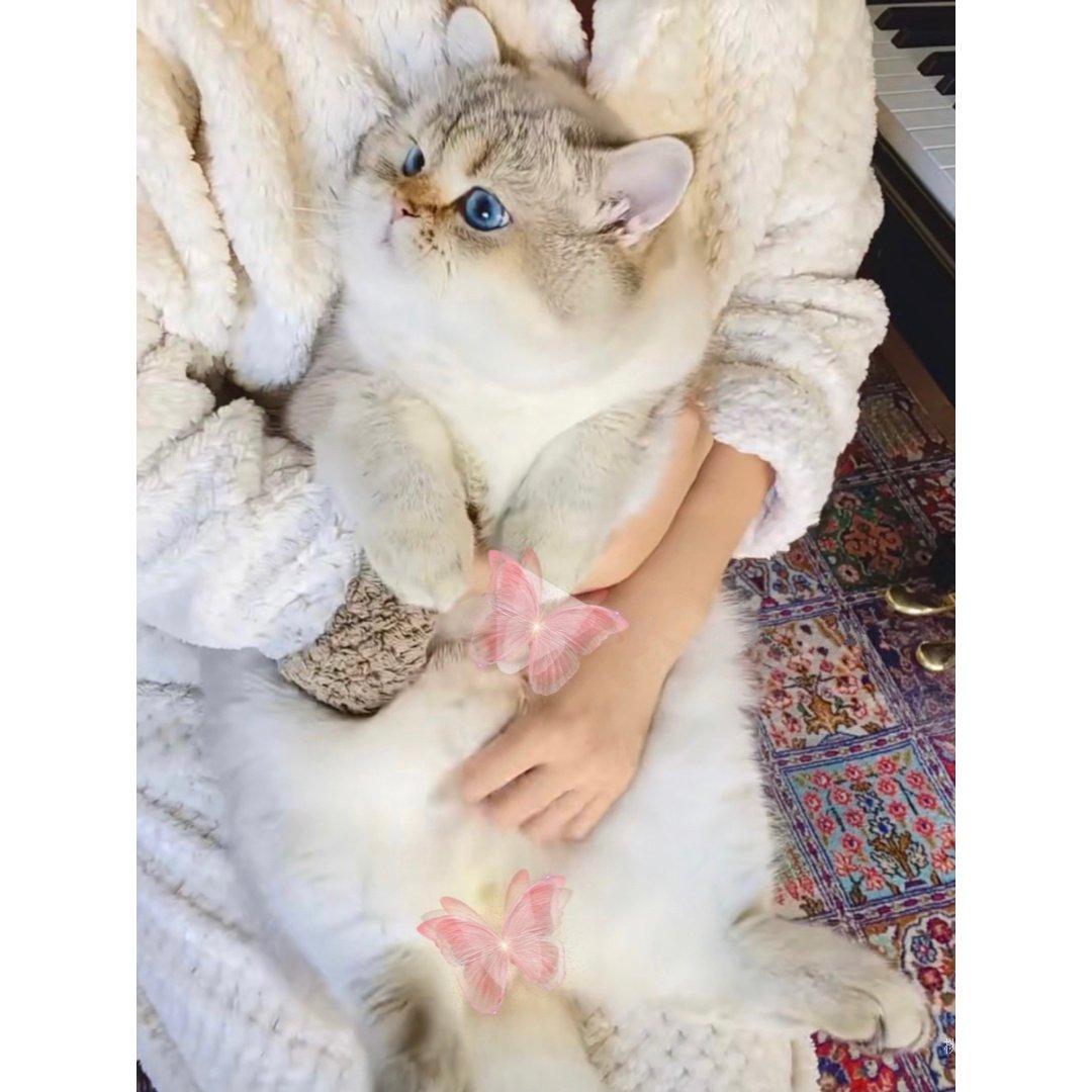 我的梦中情猫🐱...