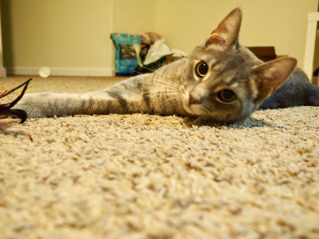 猫咪自述:我被领养的经历😬