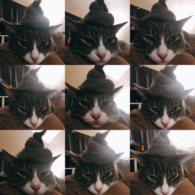 貓毛自產自銷—喵的新帽子好看嗎😹
