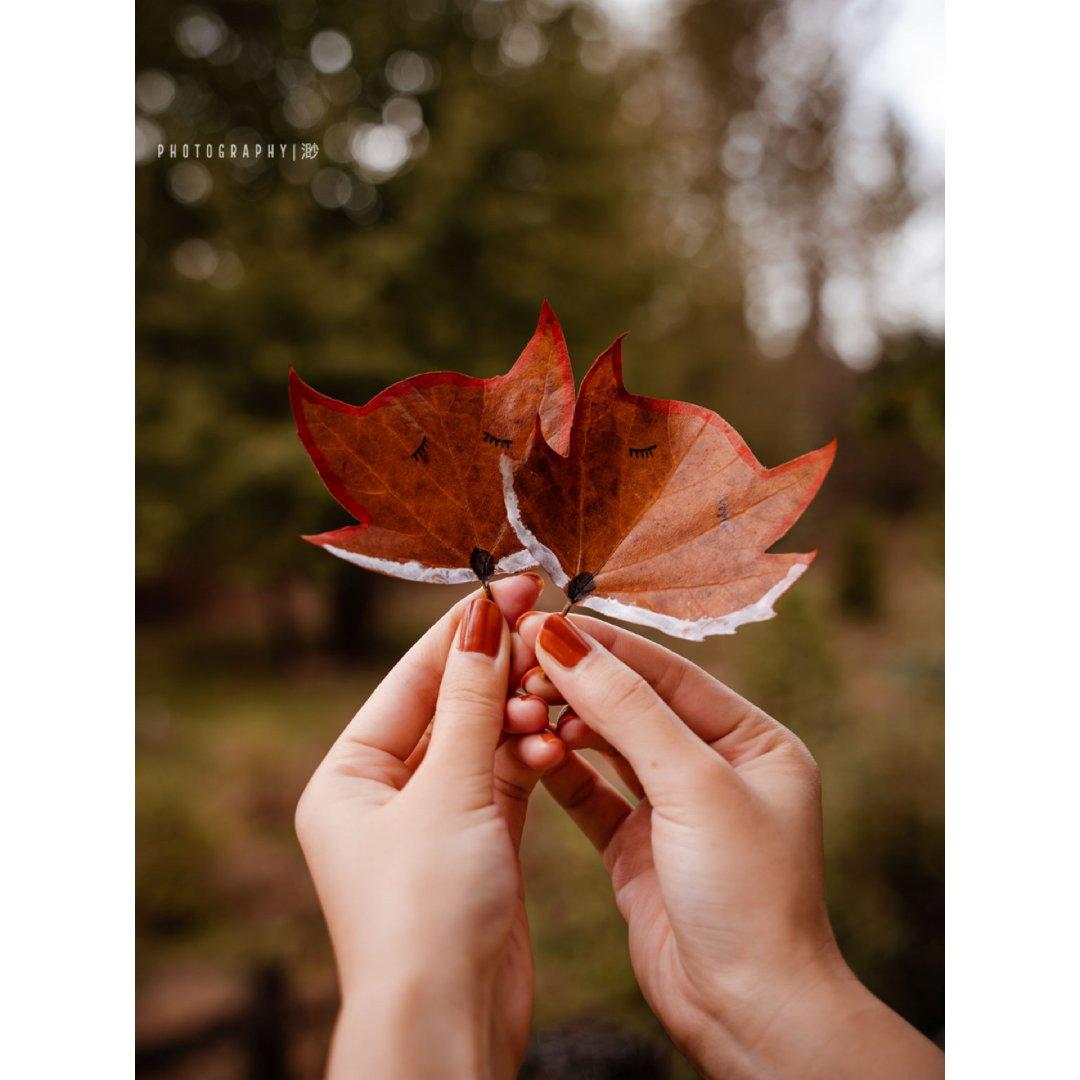 枫叶化身小狐狸🦊|秋天里的静物摄影🍁